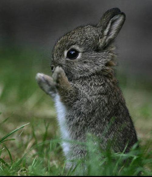 Sexually active rabbits
